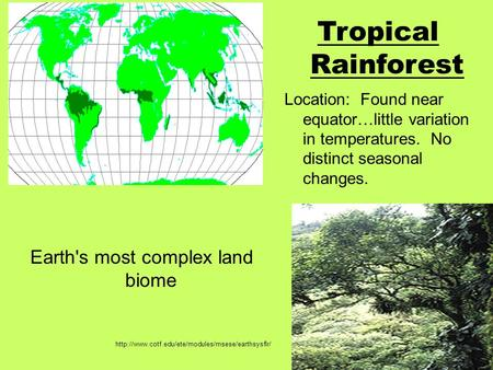 Earth's most complex land biome