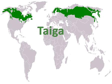The Taiga biome is the largest of the biomes in the world. It is located at the top of the world right bellow the Tundra biome and it spans across Eurasia.