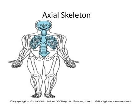 Axial Skeleton.