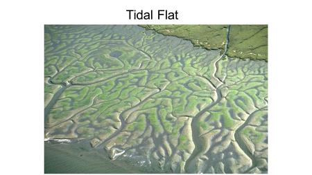 Tidal Flat Environments. Tides are a complex product of gravitational attraction (from the moon and the sun) and Earth's rotation Lunar tidal bulge rotates.