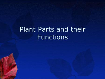 Plant Parts and their Functions Leaves-Internal.
