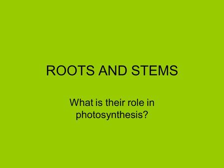 What is their role in photosynthesis?