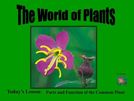 Today's Lesson : Parts and Function of the Common Plant Click here.