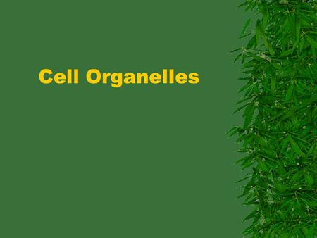 Cell Organelles. NAME THAT CELL TYPE!! Word Roots organ – -elle – organelle –
