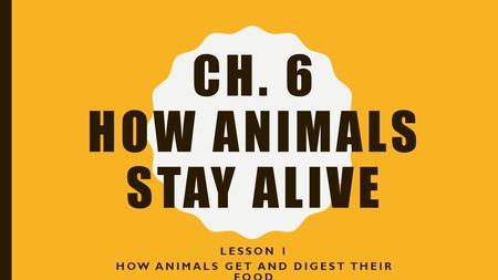 Ch. 6 How animals stay alive