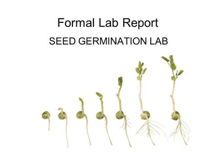 Formal Lab Report SEED GERMINATION LAB.