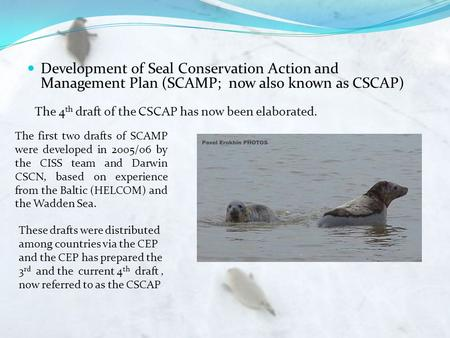 Development of Seal Conservation Action and Management Plan (SCAMP; now also known as CSCAP) The first two drafts of SCAMP were developed in 2005/06 by.