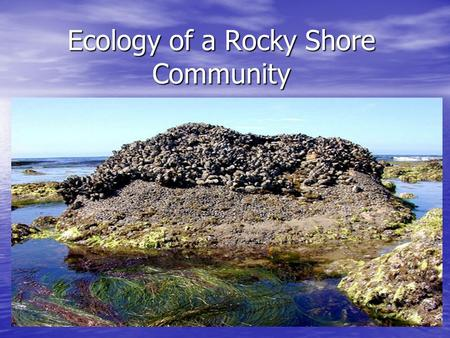 Ecology of a Rocky Shore Community. Understanding the Influence of Tides Tides have a powerful influence on how and when we play at New England beaches.