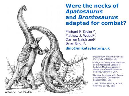 Were the necks of Apatosaurus and Brontosaurus adapted for combat?