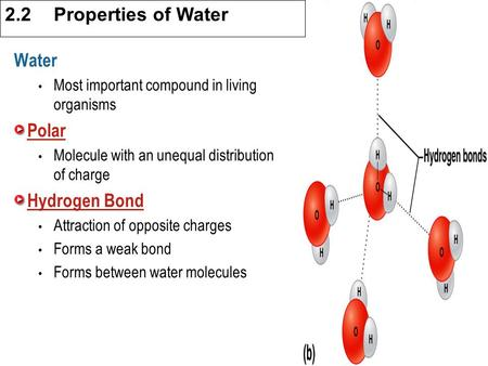 3.1 Cell Theory Water Most important compound in living organisms Polar Molecule with an unequal distribution of charge Hydrogen Bond Attraction of opposite.