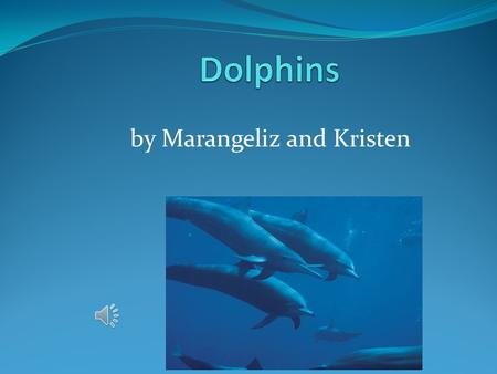 by Marangeliz and Kristen Small dolphin eat. Baby Dolphins eat squid, fish, herring, sardines and shrimp.