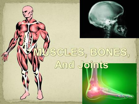 MUSCLES, BONES, And Joints.