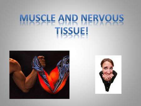 Muscle Tissues Muscle tissue is like what part of an airplane? Contract in response to stimulus  muscle fibers shorten  move body parts Types: – Skeletal.
