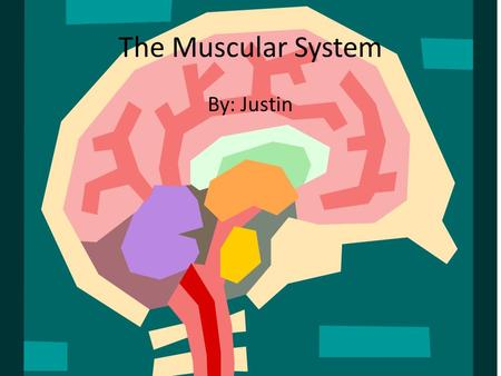 The Muscular System By: Justin. Organs  Skeletal muscles they help the body move.  Smooth muscles which are located inside organs such as the stomach.