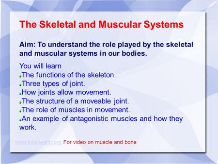 The Skeletal and Muscular Systems Aim: To understand the role played by the skeletal and muscular systems in our bodies. You will learn The functions of.