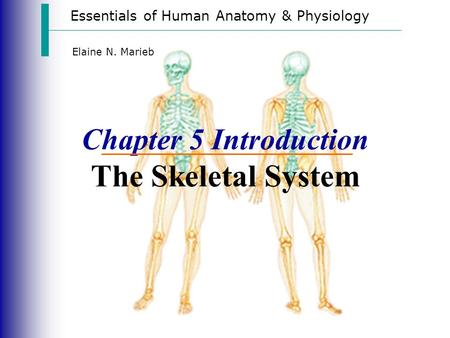 Essentials of Human Anatomy & Physiology Elaine N. Marieb Chapter 5 Introduction The Skeletal System.