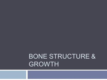 BONE STRUCTURE & GROWTH. Anatomy of a Long Bone  Epiphysis – ends  Mostly spongy bone  Diaphysis – shaft  Made of compact bone  Center is medullary.