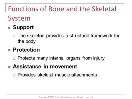 Functions of Bone and the Skeletal System Support  The skeleton provides a structural framework for the body Protection  Protects many internal organs.