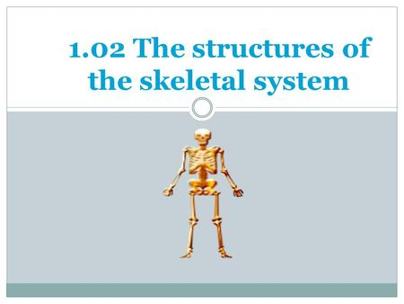 1.02 The structures of the skeletal system. Bone Formation 1.02 Remember the structures of the skeletal system 2 Osteocytes= mature bone cells TWO TYPES.