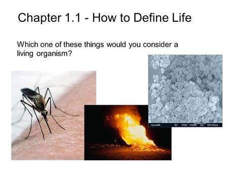 Chapter 1.1 - How to Define Life Which one of these things would you consider a living organism?