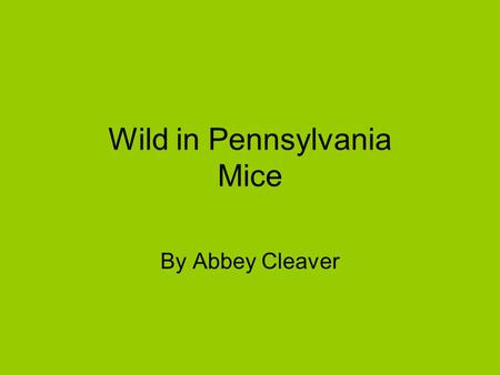 Wild in Pennsylvania Mice By Abbey Cleaver. Introduction Would you like to live in a hole? Well a mouse can. A mouse is very extraordinary.
