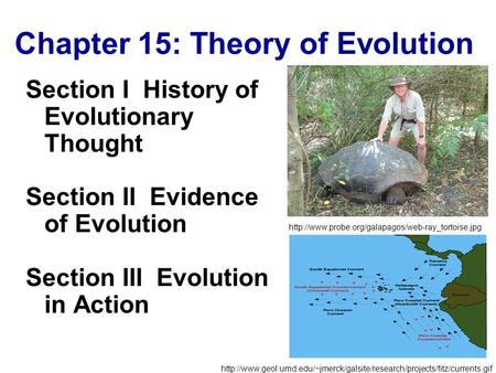Copyright © by Holt, Rinehart and Winston. All rights reserved. Chapter 15: Theory of Evolution Chapter 15 Section I History of Evolutionary Thought Section.