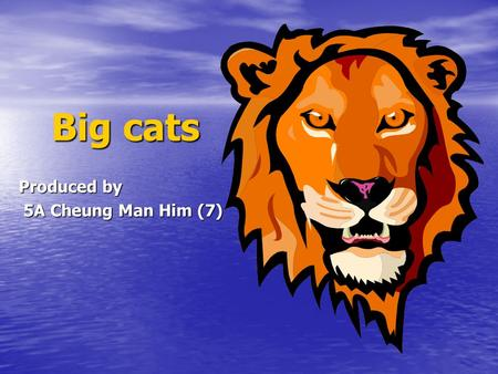 Big cats Big cats Produced by 5A Cheung Man Him (7) 5A Cheung Man Him (7)