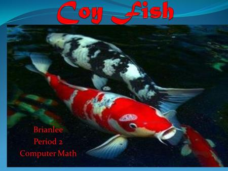 Brianlee Period 2 Computer Math. What they eat and what predator eats them You can choose to not feed them at all because Koi fish are bottom feeders,