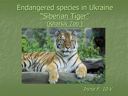 "Endangered species in Ukraine ""Siberian Tiger"" (Kharkiv Zoo )"