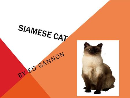 SIAMESE CAT BY ED GANNON. DID YOU KNOW THAT A SIAMESE CAT IS VERY SKINNY AND LONG? THEY ALSO HAVE LONG SLEEK BODIES.