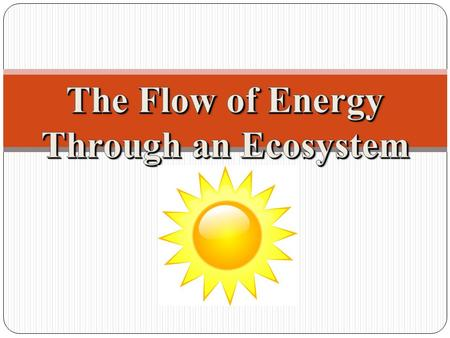 One-Way Energy Flow: All energy on earth comes from the _______ (as high quality energy) * Moves through organisms by ______________________ * Becomes.