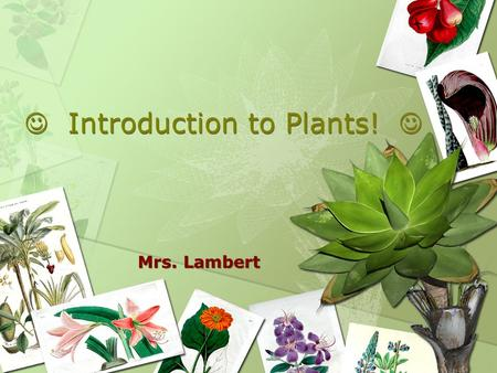 Introduction to Plants! Mrs. Lambert. Plants The Basics Multicellular Eukaryotes Cell walls made of cellulose Autotrophs An Early Scientist described.