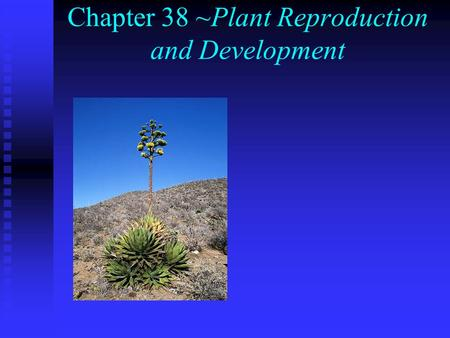 Chapter 38 ~Plant Reproduction and Development. I. Sexual Reproduction n A. Alternation of generations: haploid (n) and diploid (2n) generations take.