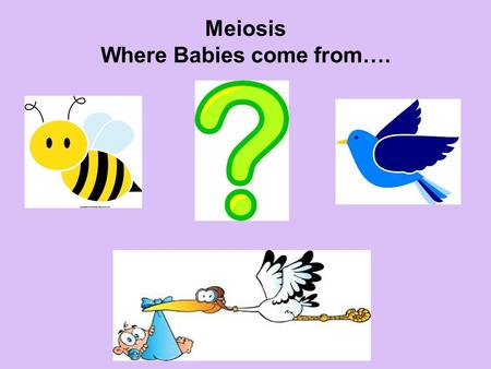 Meiosis Where Babies come from….. Movie Match Same story but different versions Copies of those versions that are identical to their original.