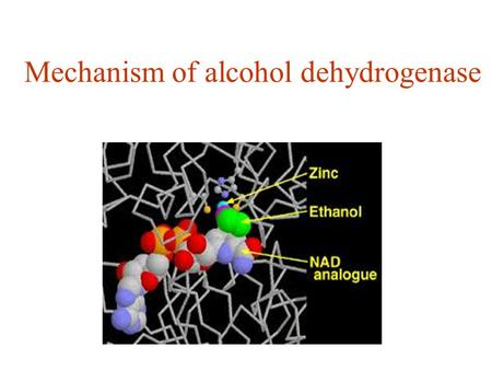 Mechanism of alcohol dehydrogenase