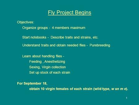 1 Fly Project Begins Objectives: Organize groups - 4 members maximum Start notebooks - Describe traits and strains, etc. Understand traits and obtain needed.
