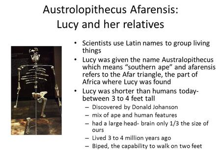Austrolopithecus Afarensis: Lucy and her relatives Scientists use Latin names to group living things Lucy was given the name Australopithecus which means.