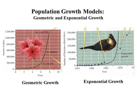 Population Growth Models: Geometric and Exponential Growth Geometric Growth Exponential Growth.