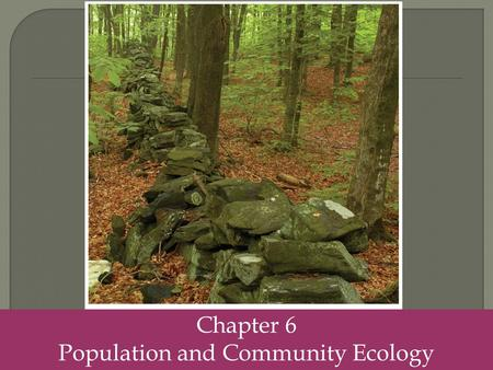 Chapter 6 Population and Community Ecology.  Population size- the total number of individuals within a defined area at a given time.  Population density-