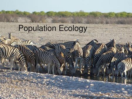 Population Ecology. Population Essential Questions What factors influence populations in ecosystems? How do human population dynamics affect the world.