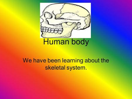 We have been learning about the skeletal system.