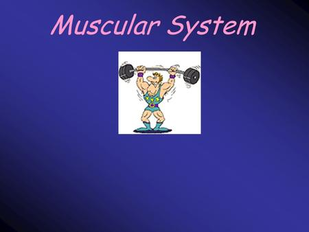 Muscular System. Facts about muscles… A skeleton cannot move by itself > 40% of the mass of the average human body is muscle Found everywhere in your.