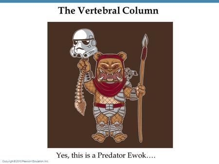 Copyright © 2010 Pearson Education, Inc. The Vertebral Column Yes, this is a Predator Ewok….