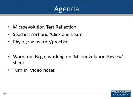 Agenda Microevolution Test Reflection Seashell sort and 'Click and Learn' Phylogeny lecture/practice Warm up: Begin working on 'Microevolution Review'