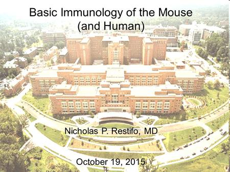 Basic Immunology of the Mouse (and Human) Nicholas P. Restifo, MD October 19, 2015.