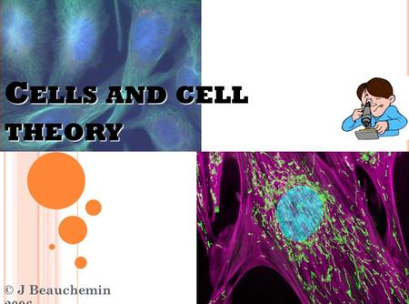 C ELLS AND CELL THEORY © J Beauchemin 2006 C HARACTERISTICS OF L IVING T HINGS ….( A REVIEW ) are made up of cells (organization). respond to the environment.