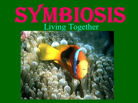 Symbiosis Living Together. What is Symbiosis? Literal definition: the act of living together What it means: –Two organisms that live together –Temporarily.