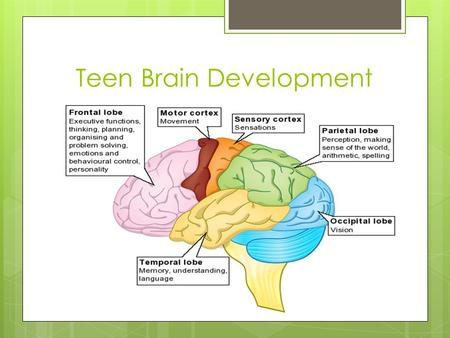 Teen Brain Development. Autobiographical and Emotional Memory.