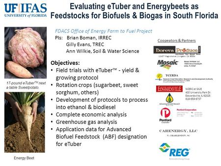 Evaluating eTuber and Energybeets as Feedstocks for Biofuels & Biogas in South Florida 17-pound eTuber TM next a table Sweetpotato. Objectives: Field trials.