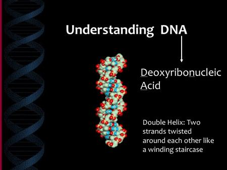 Understanding DNA Deoxyribonucleic Acid Double Helix: Two strands twisted around each other like a winding staircase.